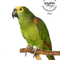 Adopt A Pet :: Orsen - Stratford, CT