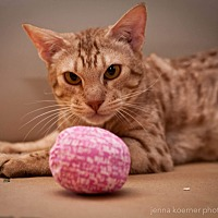 Adopt A Pet :: Stewart - Riverside, CA