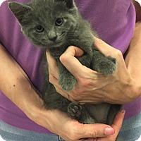 Adopt A Pet :: Lovina - Pittstown, NJ
