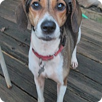 Adopt A Pet :: BETTY BOOP - Oswego, NY