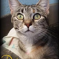 Adopt A Pet :: Darla - Hartford City, IN