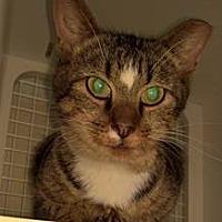 Adopt A Pet :: Mac - Columbus, OH
