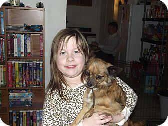 Chihuahua Mix Dog for adoption in Alexandria, Virginia - Mimi