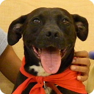 Terrier (Unknown Type, Medium) Mix Dog for adoption in McCormick, South Carolina - Ladybird