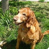 Adopt A Pet :: Cleo - St Louis, MO