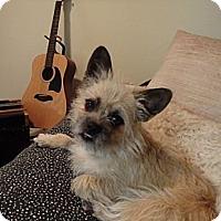 Adopt A Pet :: Winston - Douglas, ON