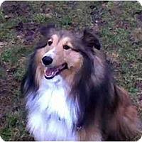 Adopt A Pet :: Austin - Indiana, IN