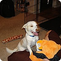 Adopt A Pet :: Whitey-Only $25 adoption fee! - Litchfield Park, AZ