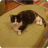 Adopt A Pet :: Martha--PETSMART - Muncie, IN