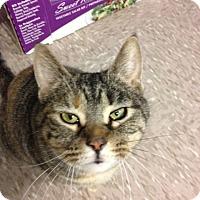 Adopt A Pet :: Elsa - Byron Center, MI