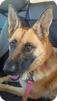 German Shepherd Dog Mix Dog for adoption in Blackstock, Ontario - Chara - Foster Home Needed