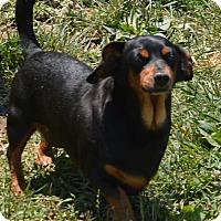 Adopt A Pet :: Madison - Prole, IA
