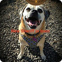 Adopt A Pet :: Taco ~ Adoption Pending - Youngstown, OH