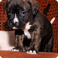Adopt A Pet :: Chunk - Oviedo, FL