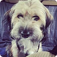Adopt A Pet :: Fozzie - San Antonio, TX