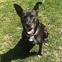 Adopt A Pet :: Polly - Jasper, TN