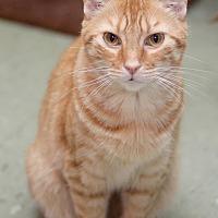 Adopt A Pet :: GiGi - Pensacola, FL