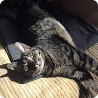 Adopt A Pet :: Penny - Oak Park, IL