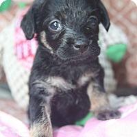 Adopt A Pet :: Daphne - Grand Bay, AL