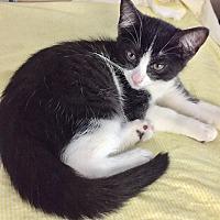 Adopt A Pet :: Alexander - Cerritos, CA