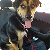 Adopt A Pet :: Clementine - Winnipeg, MB