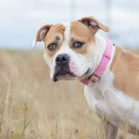Adopt A Pet :: Gracie - Cheyenne, WY