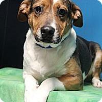 Adopt A Pet :: Rogue - Wytheville, VA