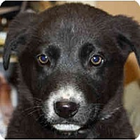 Adopt A Pet :: Lewis-ADOPTED! - kennebunkport, ME