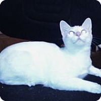 Adopt A Pet :: K-Hannah1-Hobbs - Colorado Springs, CO