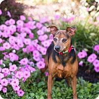Adopt A Pet :: Spike - Syracuse, NY