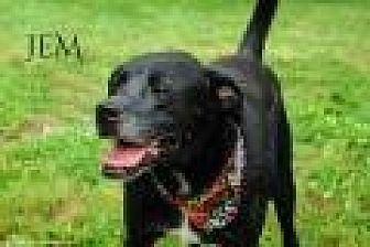 Labrador Retriever Mix Dog for adoption in Columbia, Tennessee - Jem