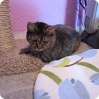 Adopt A Pet :: Tessa - Coos Bay, OR