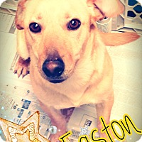 Adopt A Pet :: Easton - Odessa, TX