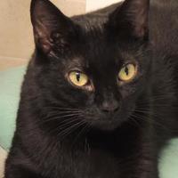 Adopt A Pet :: Raven - Westville, IN