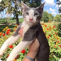 Adopt A Pet :: Miles - Smithtown, NY