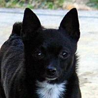 Adopt A Pet :: Neeko - Antioch, CA