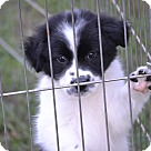 Adopt A Pet :: Mickey