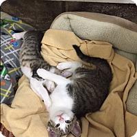 Adopt A Pet :: Pascal - Ashland, OH