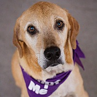 Adopt A Pet :: Myles (SPONSORED) - Springfield, MO