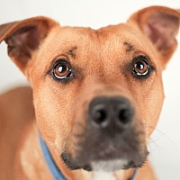 Adopt A Pet :: Royal - Pittsburg, KS