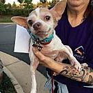 Adopt A Pet :: Mr D