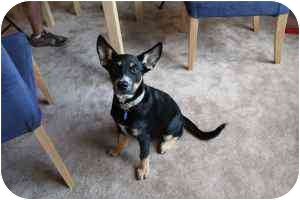 Shepherd (Unknown Type) Mix Dog for adoption in Humble, Texas - Lola