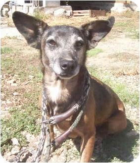 Spaniel (Unknown Type)/Terrier (Unknown Type, Small) Mix Dog for adoption in Sacramento, California - Fay