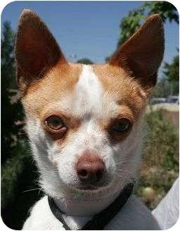 Chihuahua Mix Dog for adoption in Phoenix, Oregon - Dallas