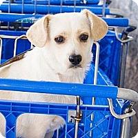 Adopt A Pet :: Bonnie and CLYDE (CLYDE) - Duluth, GA