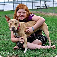 Adopt A Pet :: Sweet Pea - Orlando, FL