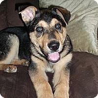 Adopt A Pet :: Dawson - Wasilla, AK