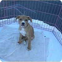 Adopt A Pet :: Miley - Mesa, AZ