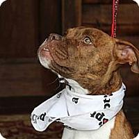 Adopt A Pet :: Louis - Reisterstown, MD