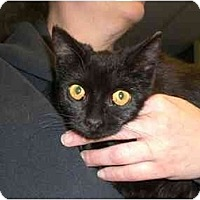 Adopt A Pet :: Sprite - Lombard, IL